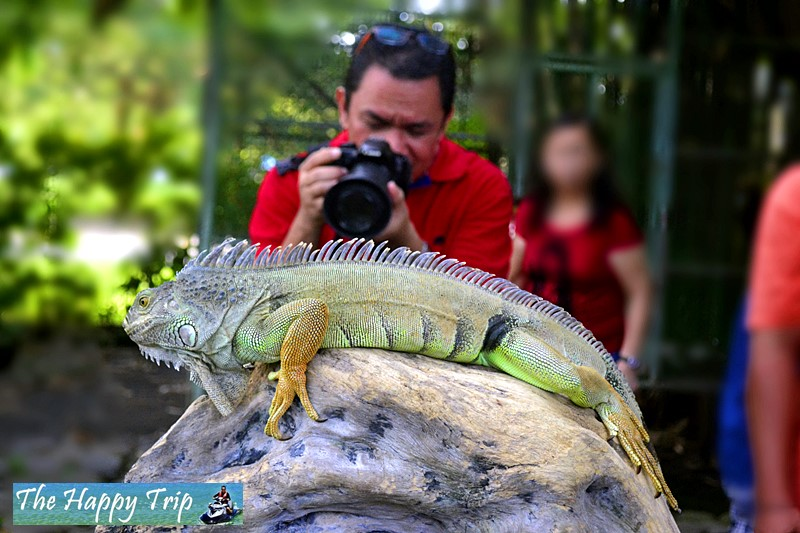 DAVAO CROCODILE FARM TRAVEL GUIDE