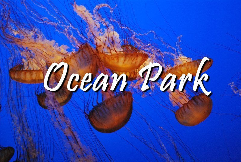 OCEAN PARK + HONGKONG TRAVEL GUIDE