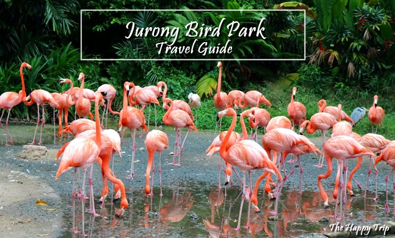2018 JURONG BIRD PARK TRAVEL GUIDE | ATTRACTIONS, ITINERARY, BUDGET