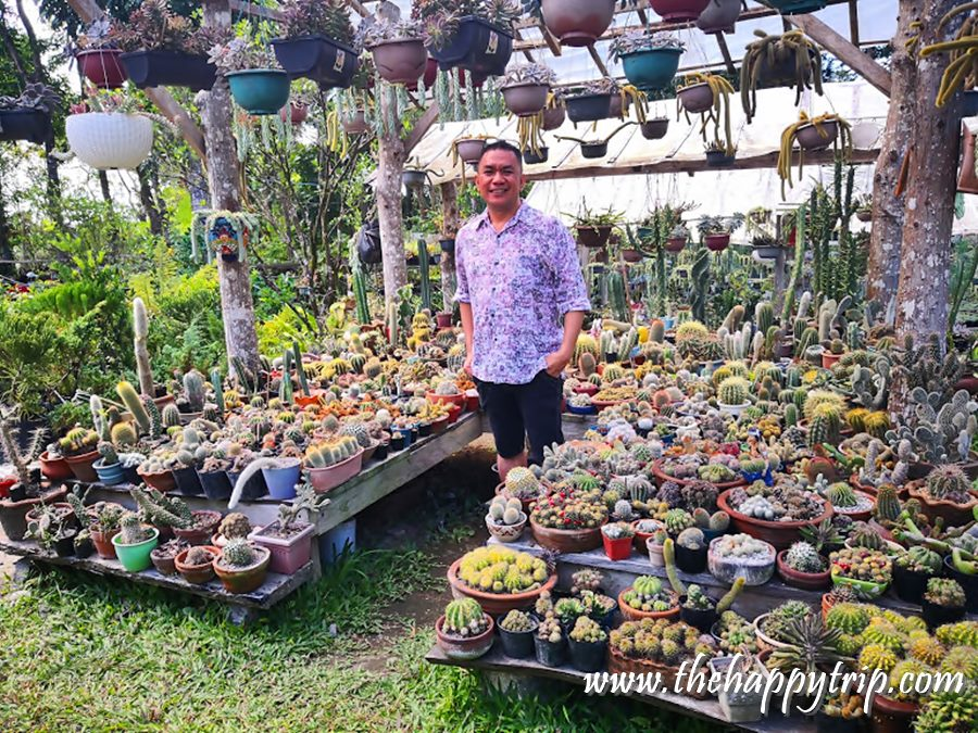 huge collection of succulents