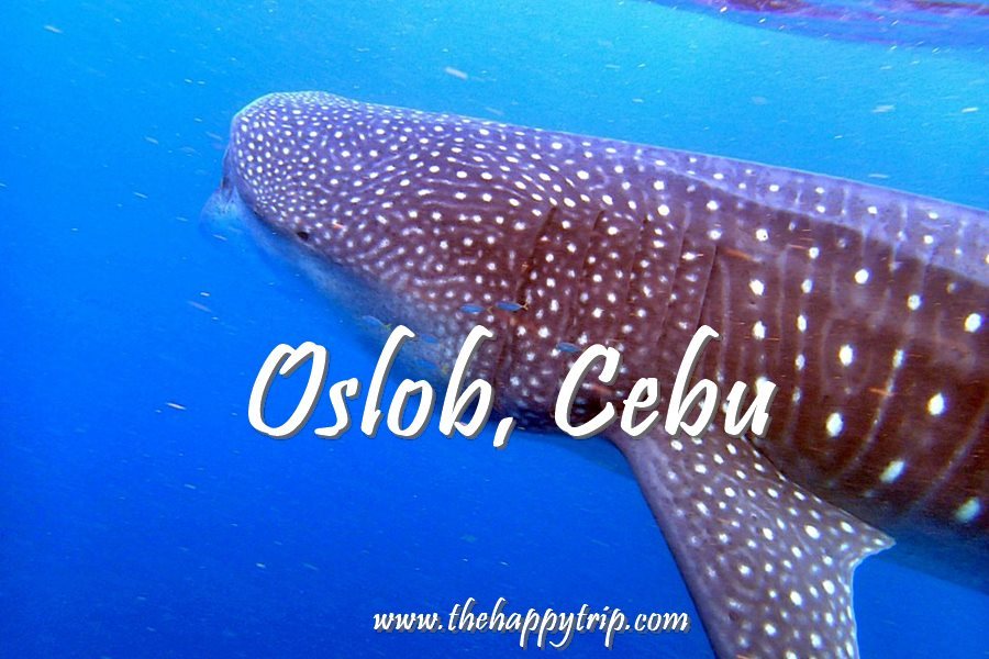 14 THINGS TO DO IN OSLOB, CEBU | TOURIST ATTRACTIONS