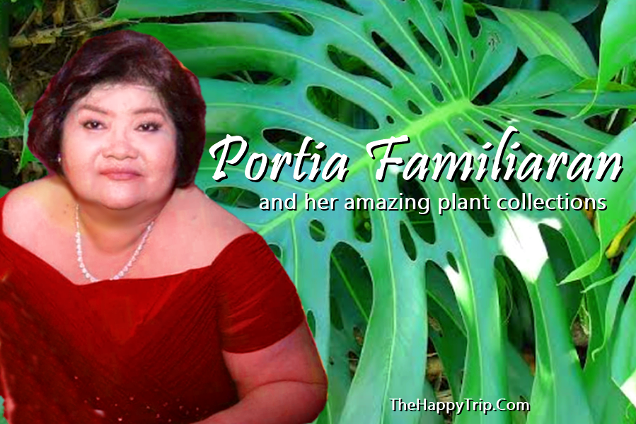 PORTIA FAMILIARAN AND HER AMAZING PLANT COLLECTIONS | BACOLOD CITY